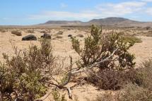Fuerteventura - Desert